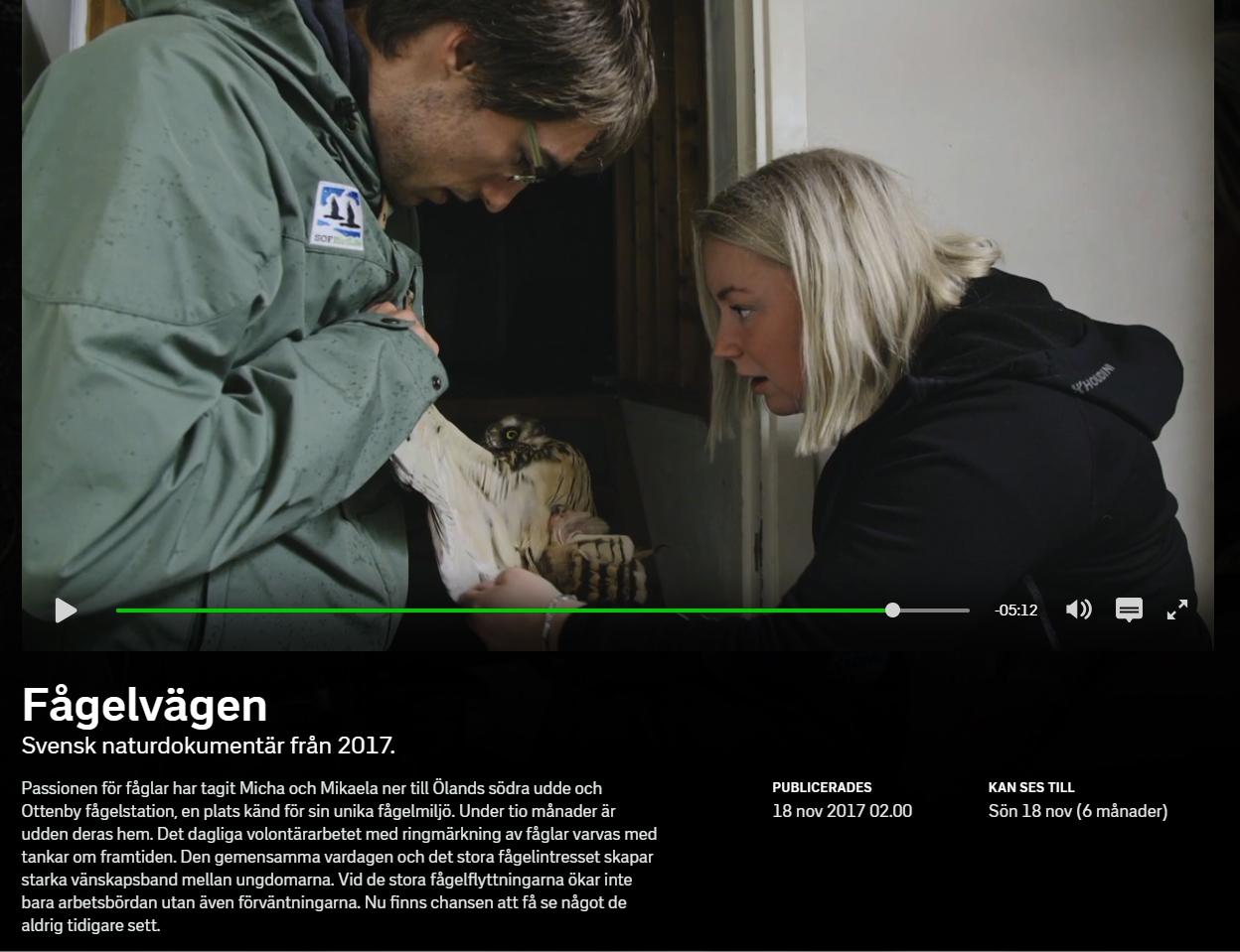 Anders Odd Wulff Nielsen og en svensk kollega undersøger en mosehornugle.Foto er fra udsendelsen.