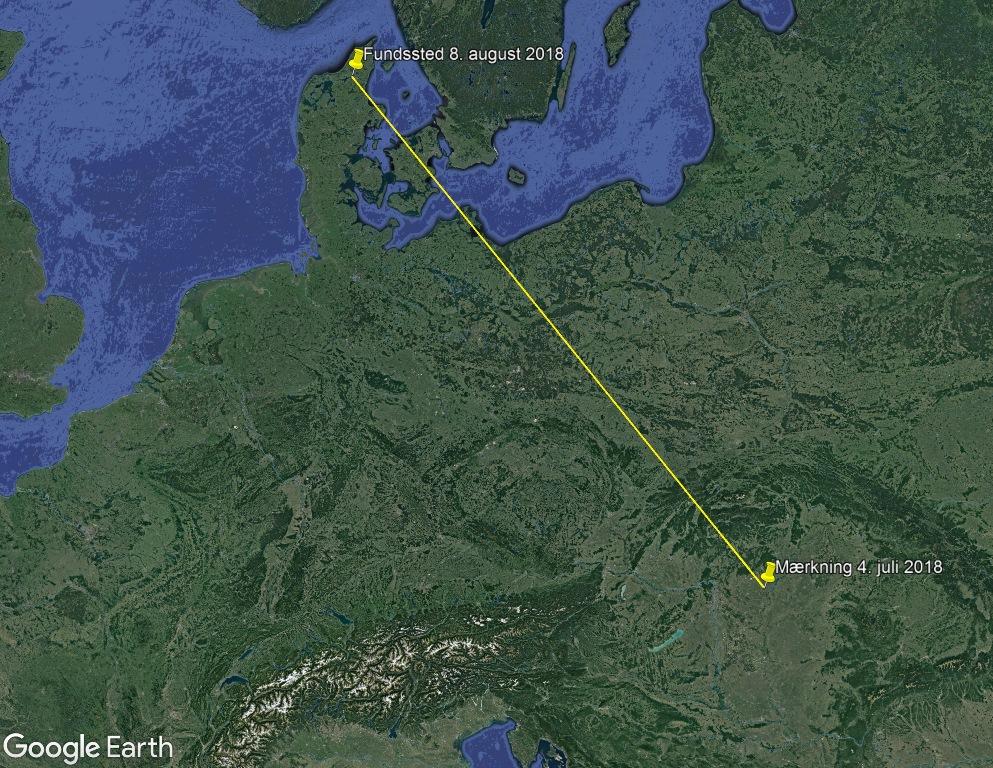 Kort: Mærknings- og genfundslokalitet for aftenfalken. Afstand i lige linje: 1.279 km.