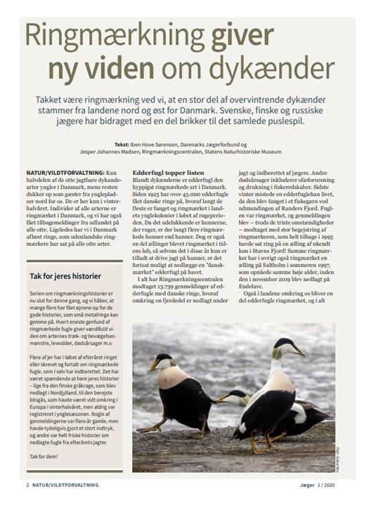"""Foto af artiklen """"Ringmærkning giver ny viden om dykænder"""" fra Jæger 1-2020"""